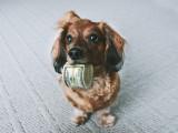 Les races de chiens les plus chères
