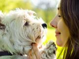 Comment être un bon maître pour son chien en 20 conseils