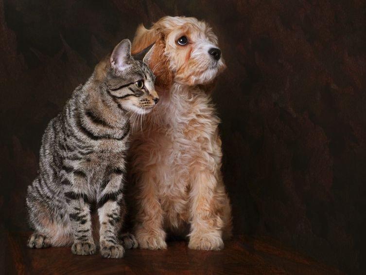 Un congé « parental » pour l'adoption d'un chien ou d'un