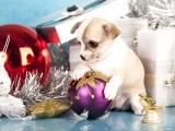 Un chiot en cadeau de Noël : la fausse bonne idée ?