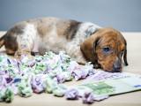 Le budget annuel d'un chien : alimentation, santé, accessoires...