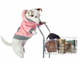 Combien coûte l'entretien d'un chien ?