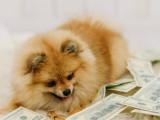 Acheter un chien : le prix d'un chien