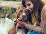 Les démarches à effectuer après avoir adopté un chien