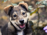 Les documents obligatoires lors de l'achat d'un chien