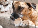 Quel comportement adopter avec un chien de refuge ?