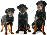Comment connaître l'âge d'un chiot ou d'un chien ?