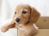 10 conseils pour préparer l'arrivée d'un chiot à la maison