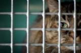 Les animaux domestiques, victimes collatérales de la crise