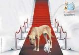 chiens, chats : Abandon animaux - Triste palme pour la France