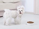 Des chiens victimes de croquettes mortelles