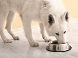 Allergies et intolérances alimentaires chez le chien : comment faire face ?
