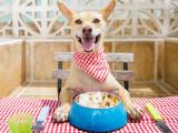 10 règles de base pour bien alimenter son chien