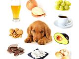 Aliments dangereux et précautions à prendre