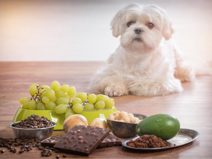 Favori Les aliments dangereux pour les chiens PT94