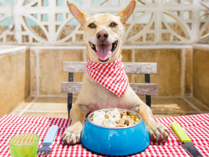 10 r gles de base pour bien alimenter son chien for Alimentation chien maison