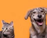 Chiens, Chats : Notre alimentation et celle de nos compagnons à quatre pattes