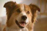 Nestlé lance la première pub télé pour chiens