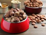 Croquettes, pâtée... : quel type de nourriture choisir pour son chien ?