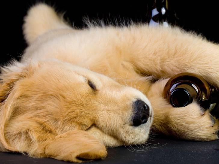 """Résultat de recherche d'images pour """"alcool dog"""""""