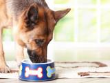 Recette de pâtée pour chien viellissant ou affaibli