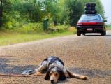 L'assurance pour chien : un moyen de limiter les abandons et les euthanasies ?