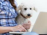Assurances pour chien : pourquoi assurer son chien