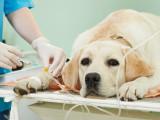Le marché des assurances pour chien en France