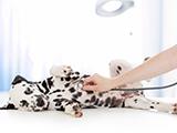 Souscrire une assurance santé pour son chien : l'exemple de SantéVet