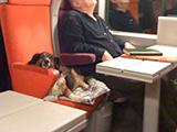 Voyager en train avec son chien et son chat