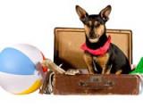 Voyager avec son chien. Les objets à ne pas oublier dans vos bagages