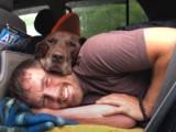 Un ancien Marine américain offre un dernier voyage à sa chienne, Bella