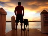Un ancien Marine américain s'offre un dernier voyage avec Bella, sa chienne labrador