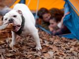 Faire du camping, de la randonnée et dormir sous la tente avec son chien