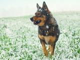 Protéger son chien du froid pendant l'hiver