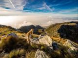 Voyager avec son chien en Grande-Bretagne : conditions, conseils, destinations recommandées