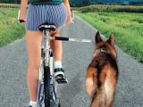 Faire de la randonnée vélo avec son chien