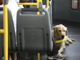 Les moyens de transport pour chien