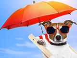 Soleil, canicule : comment protéger son chien ?