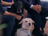 CANADA - Un chien qui fait du bien