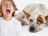Vous avez peur des chiens ? Vous êtes cynophobique