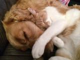 Les chiens et les chats sont-ils devenus les meilleurs amis des Français?
