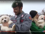 Trois chiots miraculeusement sauvés suite à une avalanche en Italie