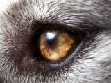 Origines du chien : comment les chiens sont-ils apparus ?