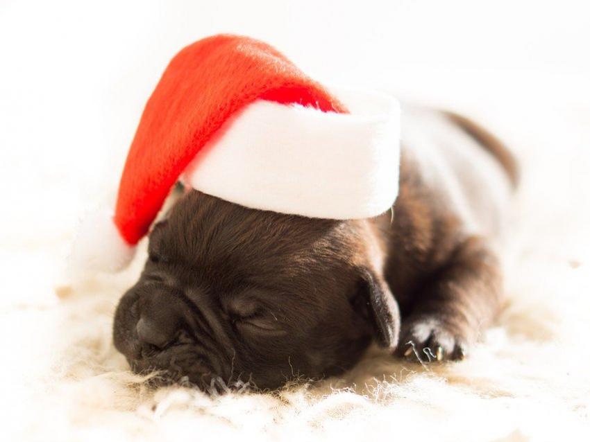 pour no l les chiens auront leur cadeau au pied du sapin. Black Bedroom Furniture Sets. Home Design Ideas