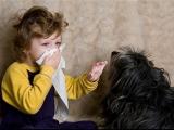 Les allergies du chat, du chien et de l'humain envers les animaux : c'est l'atopie