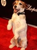 Le chien Uggie, l'autre star de