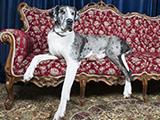 Le plus grand chien de Grande-Bretagne s'appelle Freddy et devrait continuer sa croissance