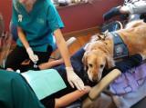 Une assistante à quatre pattes pour un cabinet dentaire pédiatrique
