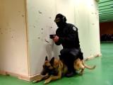 Entrainement des chiens du RAID